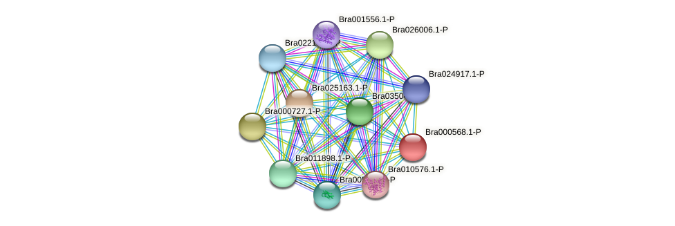 Bra000568 protein (Brassica rapa) - STRING interaction network