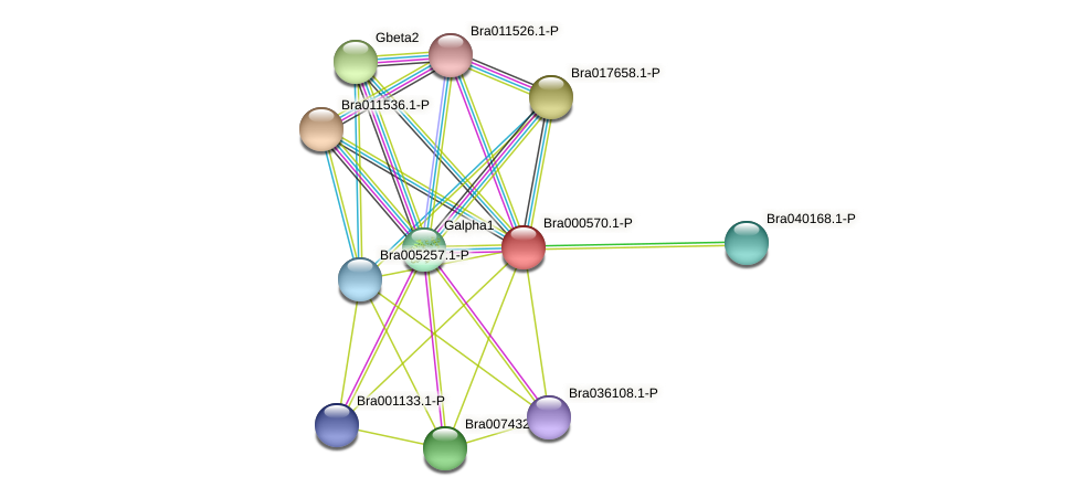 Bra000570 protein (Brassica rapa) - STRING interaction network
