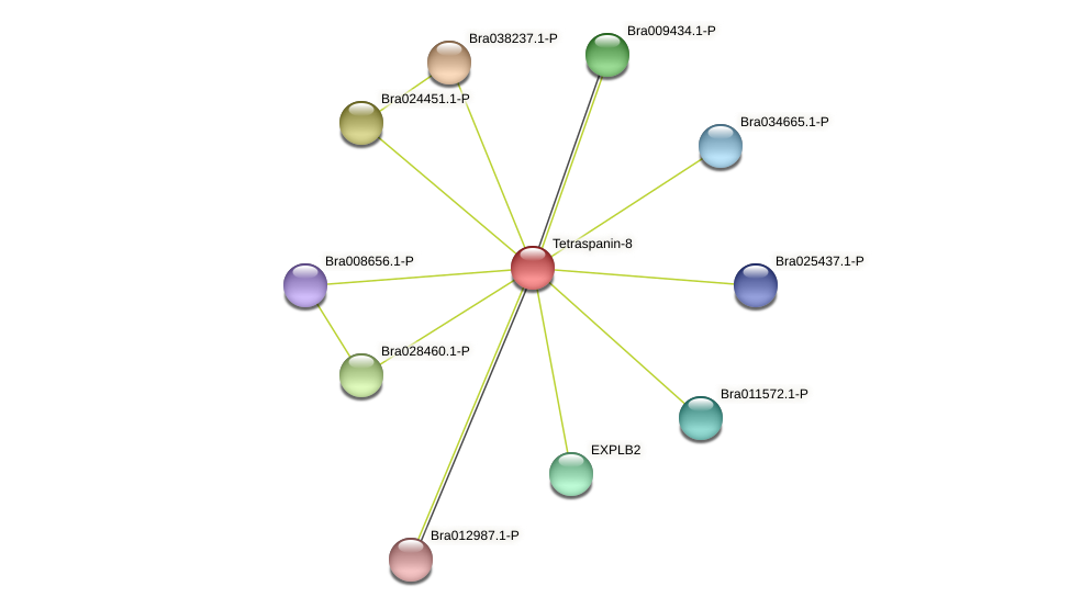 Bra000571 protein (Brassica rapa) - STRING interaction network