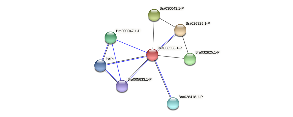 Bra000588 protein (Brassica rapa) - STRING interaction network