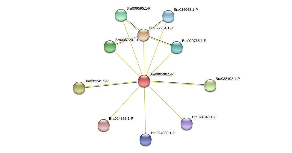 Bra000590 protein (Brassica rapa) - STRING interaction network