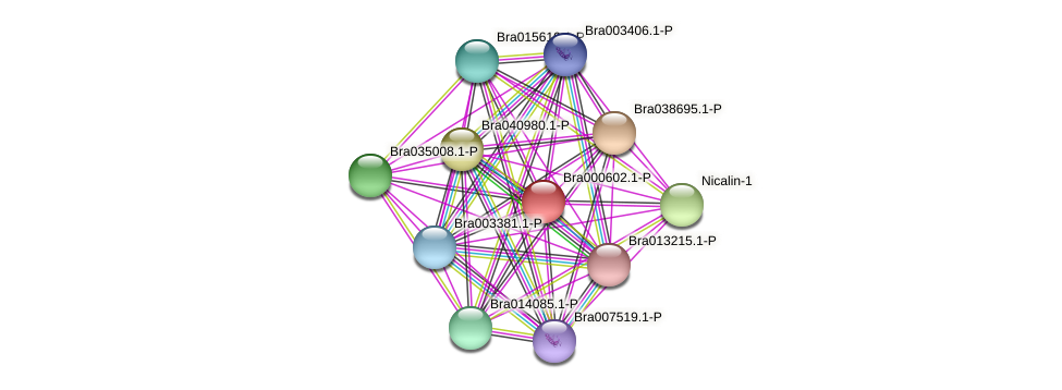 Bra000602 protein (Brassica rapa) - STRING interaction network
