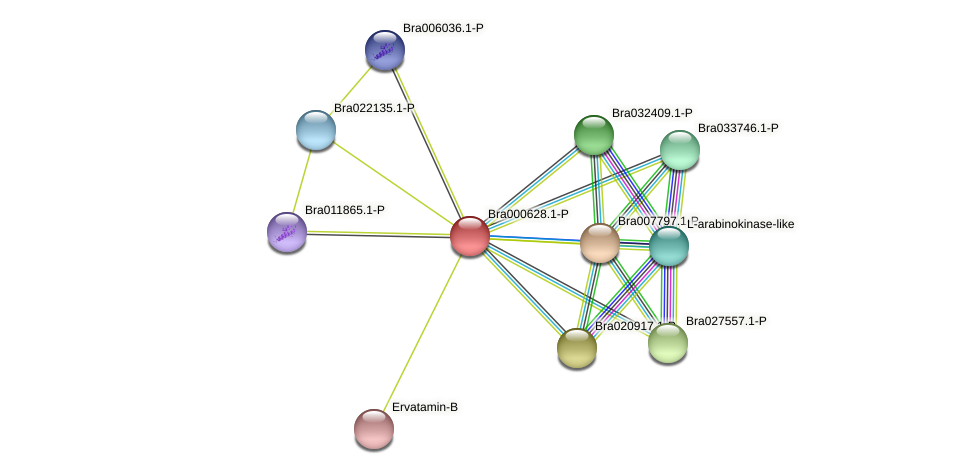 Bra000628 protein (Brassica rapa) - STRING interaction network