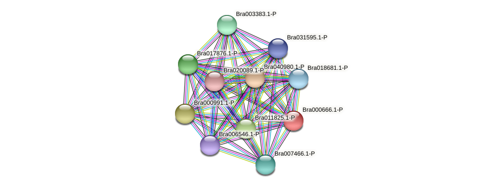 Bra000666 protein (Brassica rapa) - STRING interaction network