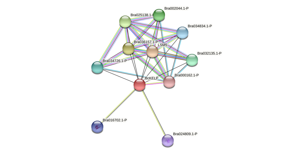 Bra000728 protein (Brassica rapa) - STRING interaction network