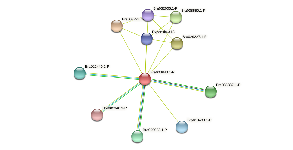 Bra000840 protein (Brassica rapa) - STRING interaction network
