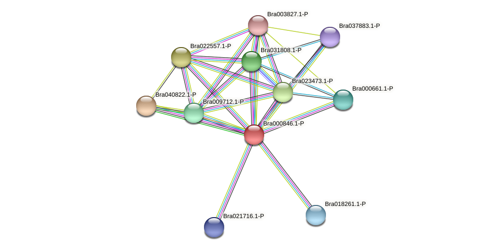 Bra000846 protein (Brassica rapa) - STRING interaction network