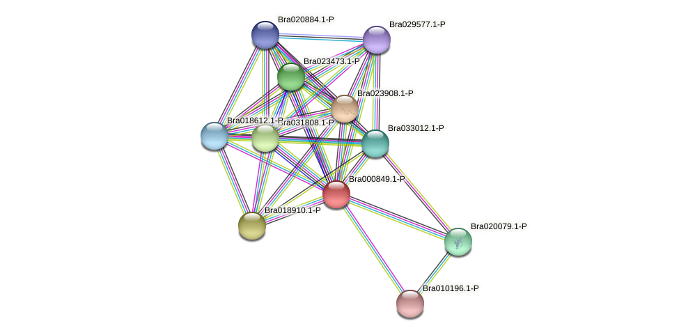 Bra000849 protein (Brassica rapa) - STRING interaction network