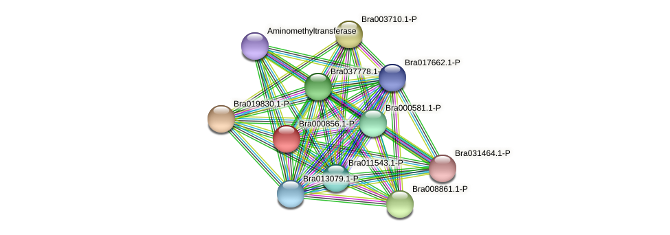 Bra000856 protein (Brassica rapa) - STRING interaction network