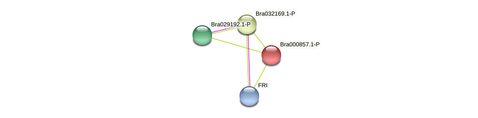 Bra000857 protein (Brassica rapa) - STRING interaction network