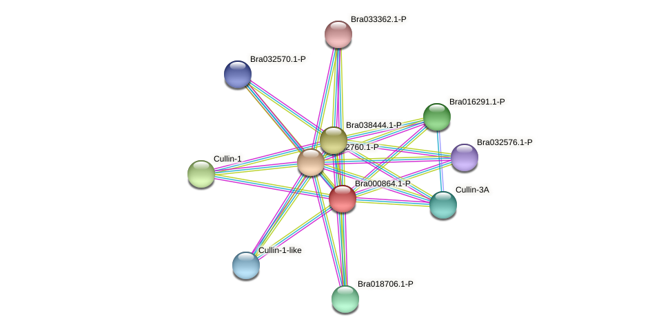 Bra000864 protein (Brassica rapa) - STRING interaction network