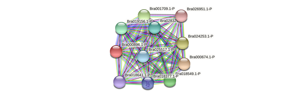 Bra000896 protein (Brassica rapa) - STRING interaction network