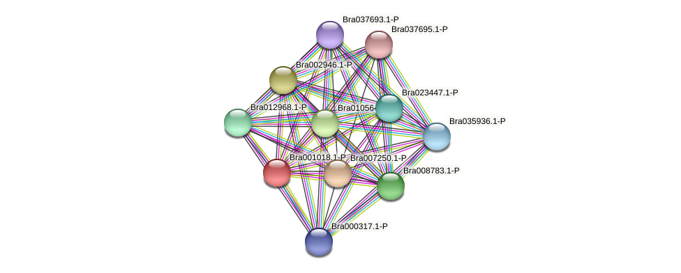 Bra001018 protein (Brassica rapa) - STRING interaction network