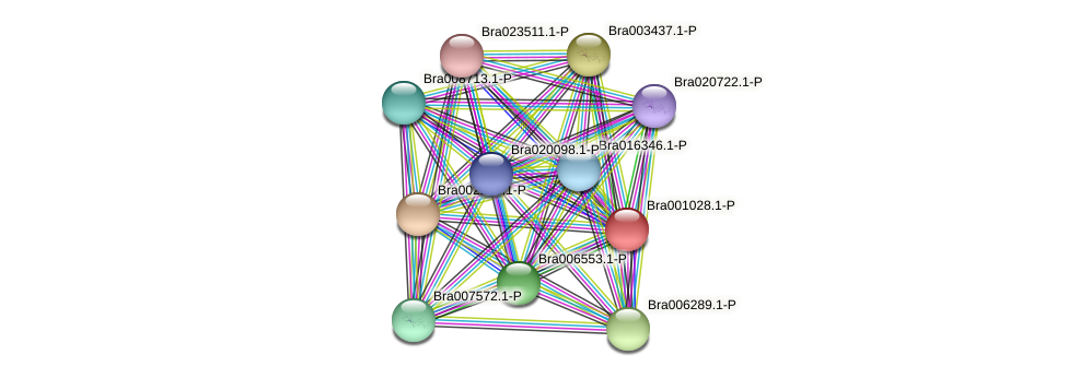 Bra001028 protein (Brassica rapa) - STRING interaction network