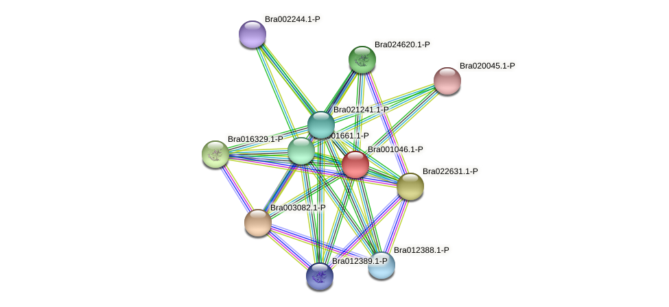 Bra001046 protein (Brassica rapa) - STRING interaction network