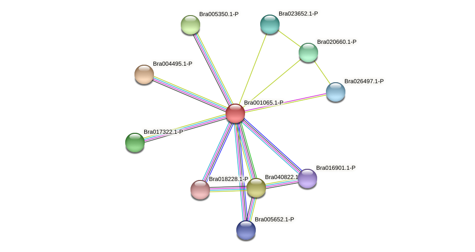 Bra001065 protein (Brassica rapa) - STRING interaction network