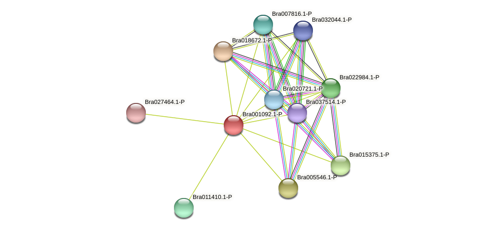 Bra001092 protein (Brassica rapa) - STRING interaction network
