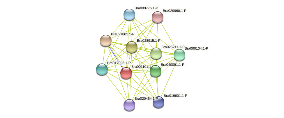 Bra001101 protein (Brassica rapa) - STRING interaction network