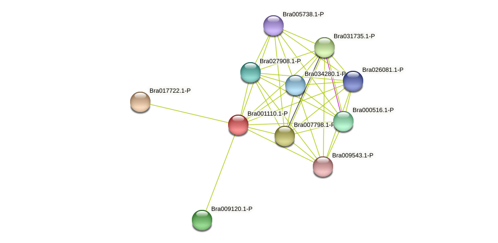 Bra001110 protein (Brassica rapa) - STRING interaction network