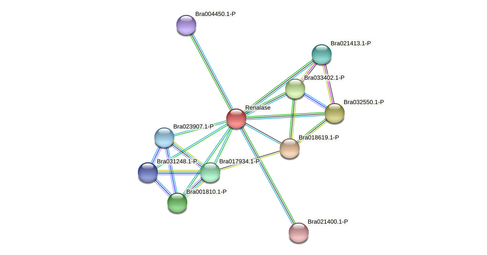 Bra001116 protein (Brassica rapa) - STRING interaction network