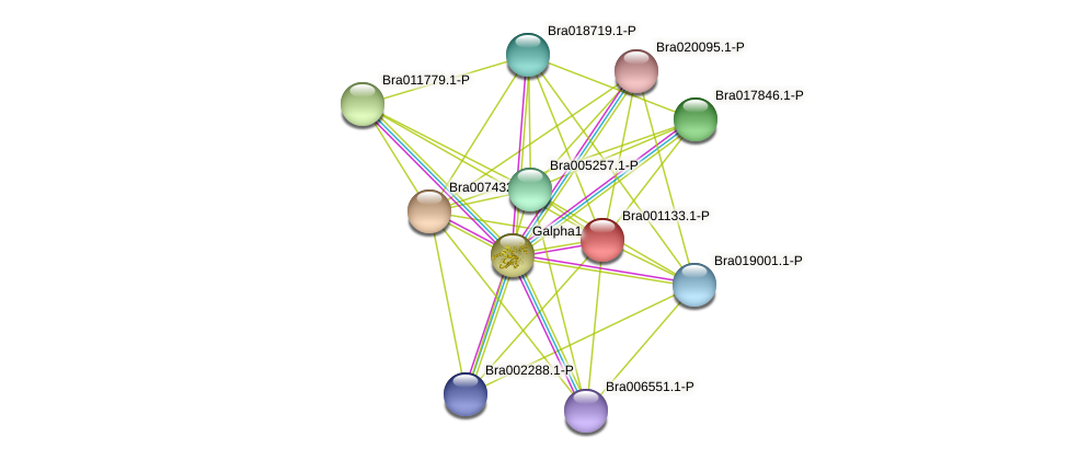 Bra001133 protein (Brassica rapa) - STRING interaction network