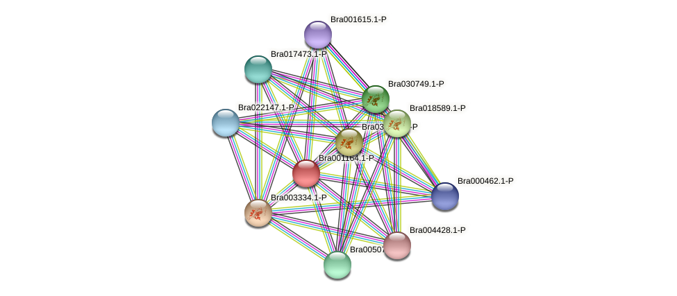 Bra001164 protein (Brassica rapa) - STRING interaction network