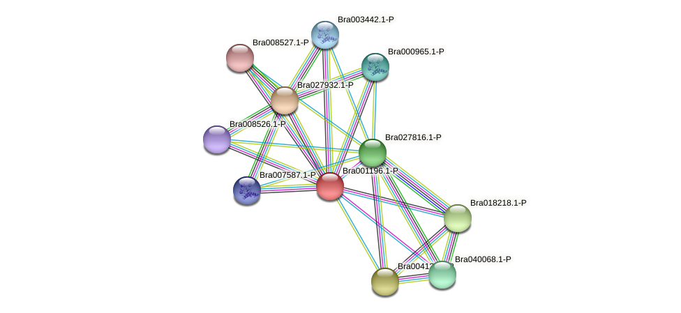 Bra001196 protein (Brassica rapa) - STRING interaction network