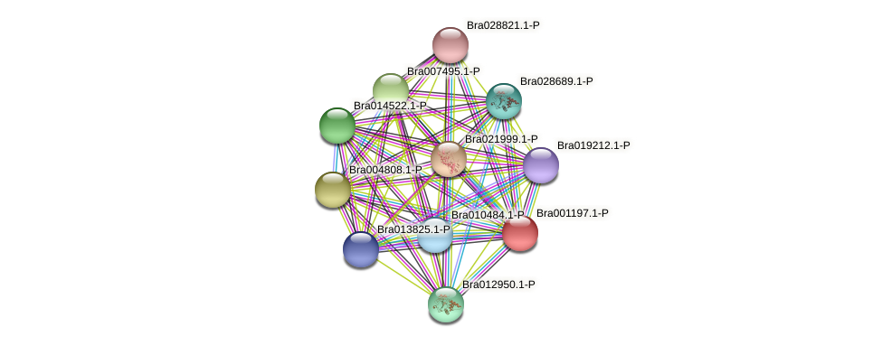 Bra001197 protein (Brassica rapa) - STRING interaction network