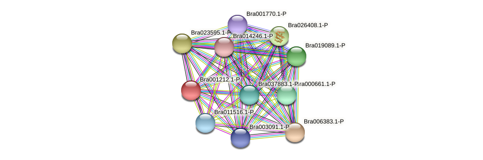 Bra001212 protein (Brassica rapa) - STRING interaction network