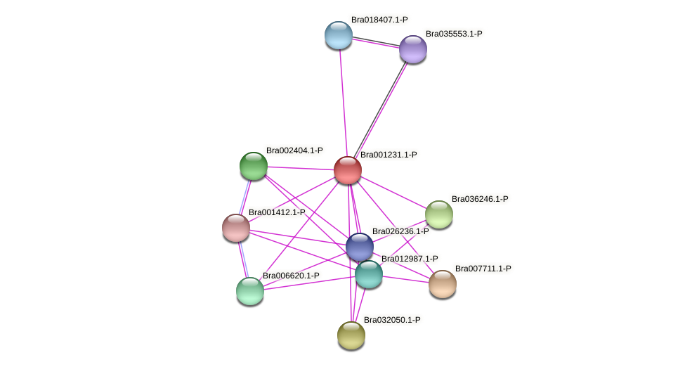 Bra001231 protein (Brassica rapa) - STRING interaction network