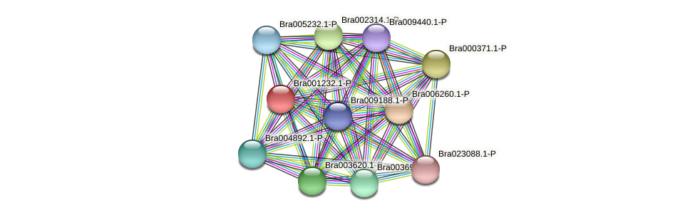Bra001232 protein (Brassica rapa) - STRING interaction network