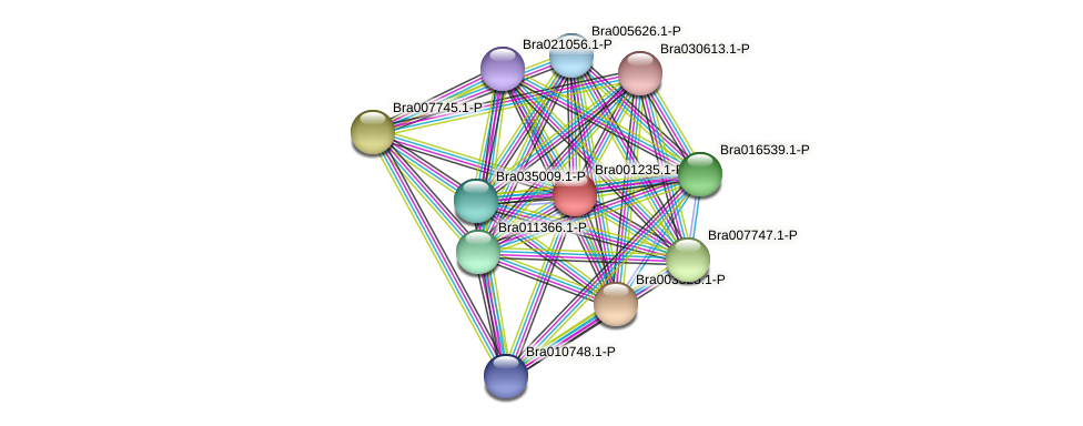 Bra001235 protein (Brassica rapa) - STRING interaction network