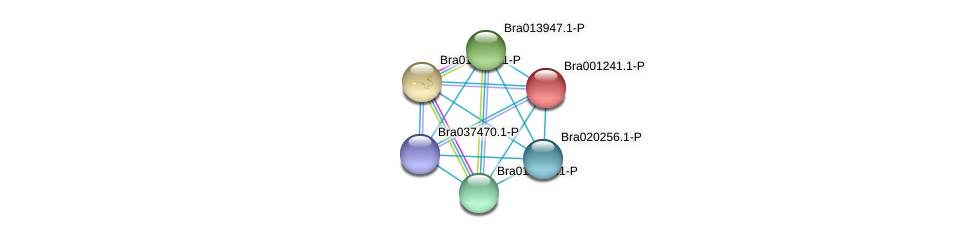 Bra001241 protein (Brassica rapa) - STRING interaction network