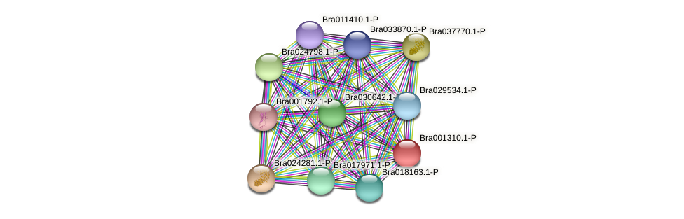 Bra001310 protein (Brassica rapa) - STRING interaction network
