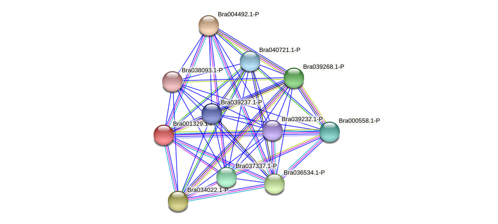 Bra001329 protein (Brassica rapa) - STRING interaction network