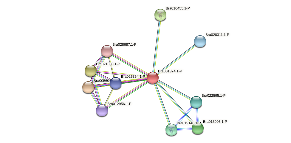 Bra001374 protein (Brassica rapa) - STRING interaction network