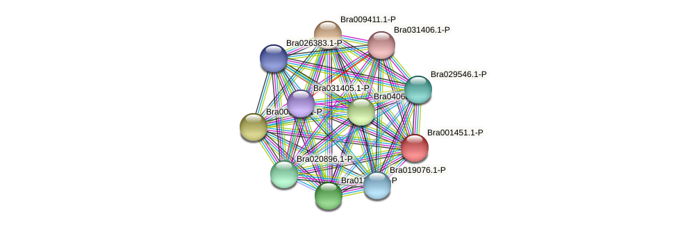 Bra001451 protein (Brassica rapa) - STRING interaction network