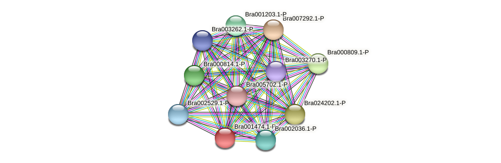 Bra001474 protein (Brassica rapa) - STRING interaction network