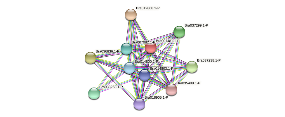 Bra001481 protein (Brassica rapa) - STRING interaction network
