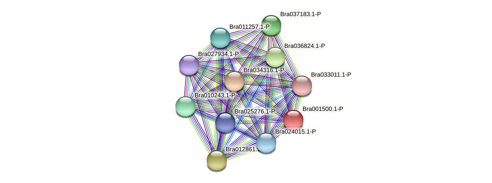 Bra001500 protein (Brassica rapa) - STRING interaction network