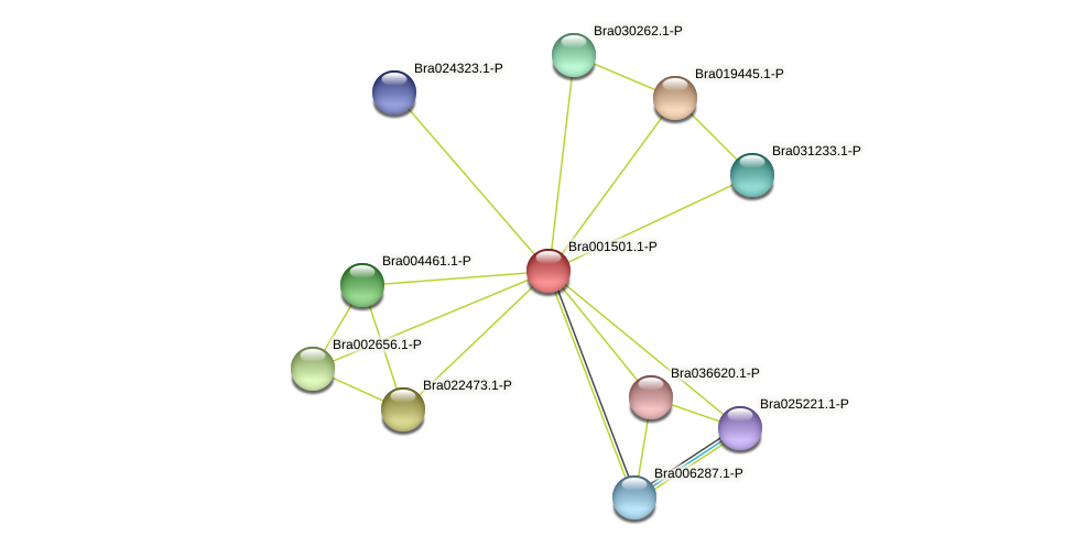 Bra001501 protein (Brassica rapa) - STRING interaction network
