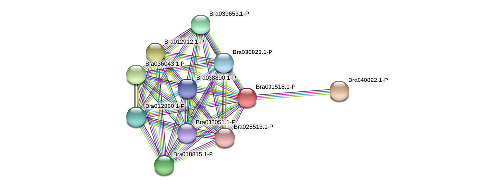 Bra001518 protein (Brassica rapa) - STRING interaction network