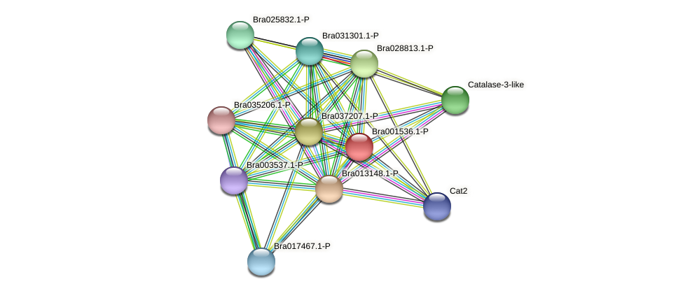 Bra001536 protein (Brassica rapa) - STRING interaction network