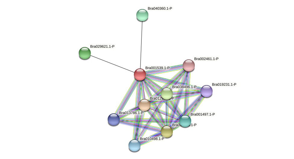 Bra001539 protein (Brassica rapa) - STRING interaction network