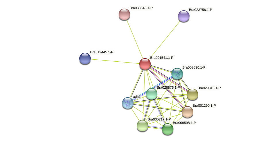 Bra001541 protein (Brassica rapa) - STRING interaction network