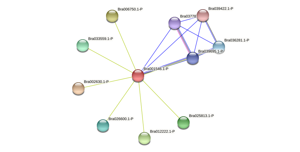 Bra001546 protein (Brassica rapa) - STRING interaction network