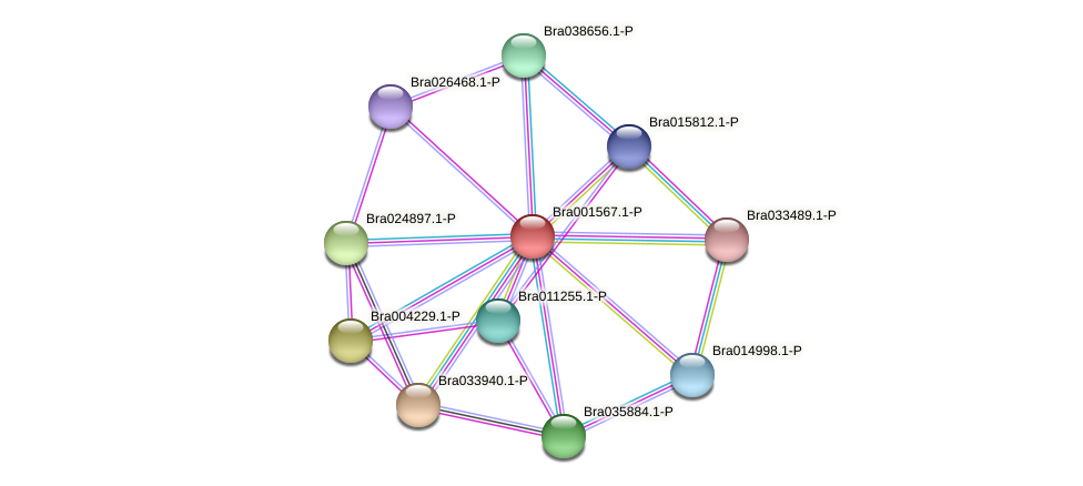 Bra001567 protein (Brassica rapa) - STRING interaction network