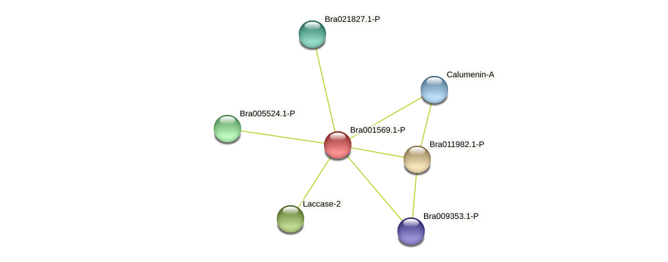 Bra001569 protein (Brassica rapa) - STRING interaction network