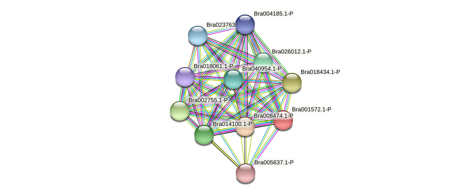 Bra001572 protein (Brassica rapa) - STRING interaction network