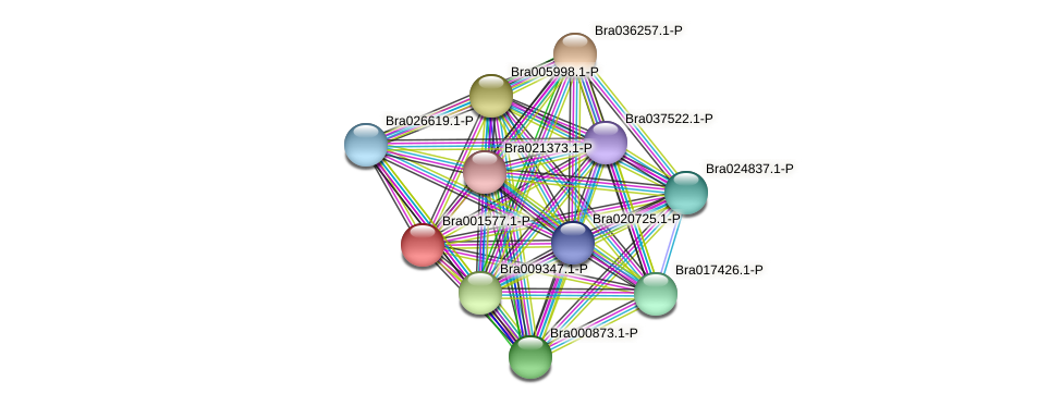 Bra001577 protein (Brassica rapa) - STRING interaction network